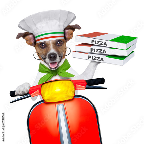 Fotobehang - pizza delivery dog