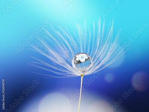 Fotobehang - Beauty water drop rain dew on a dandelion seed with reflection of flower on a blue background macro. Light air dreamy artistic image.