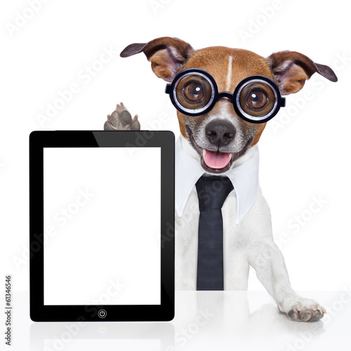 Fotobehang - business dog