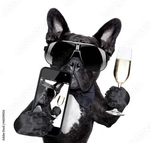 Fotobehang - french bulldog selfie