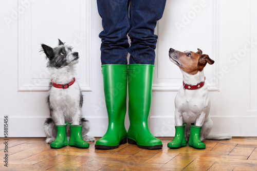 Fotobehang - two dogs and owner