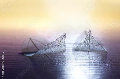 Fotobehang - Skeleton leaves in the form of ships at sea at sunset on gold and purple background. Romantic artistic image close-up macro. Template border wallpape