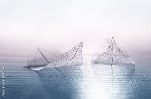 Fotobehang - Transparent skeleton leaves in the form of ships at sea at sunrise in a fog on blue and pink background. Romantic artistic image close-up macro. Templ
