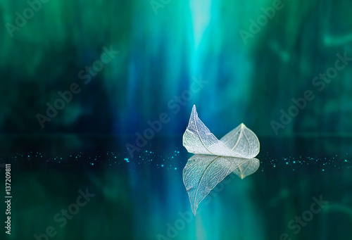 Fotobehang - White transparent leaf on mirror surface with reflection on green background macro. Abstract artistic image of ship in waters of lake. Template Border