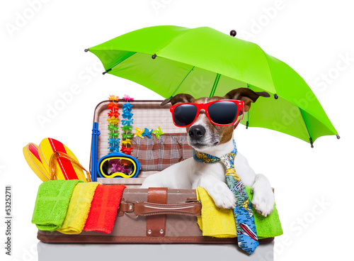 Fotobehang - summer holiday dog