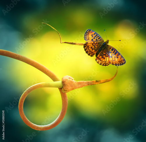 Fotobehang - Gold butterfly on nature to curl plant spring summer on a beautiful blurred green and yellow background close-up macro. Bright juicy elegant artistic