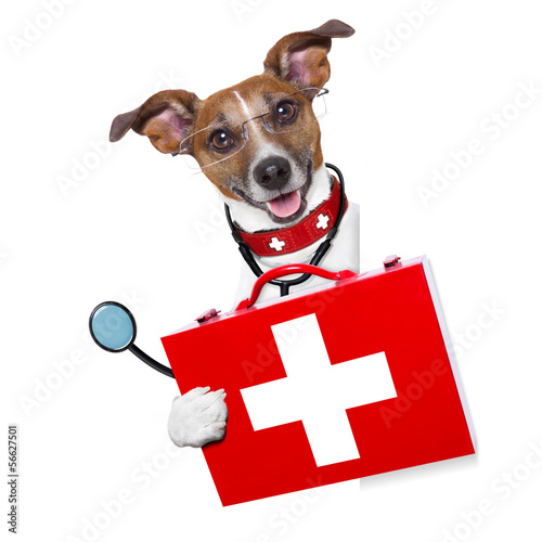 Fotobehang - medical doctor dog