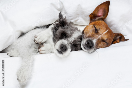 Fotobehang - two dogs in love