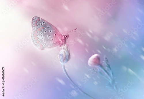 Fotobehang - Beautiful delicate elegant butterfly on a flower with a soft focus on the blurry blue and pink background in the rays of light. Dreamy romantic artist