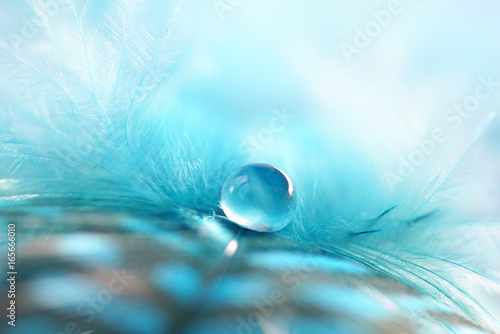 Fotobehang - Transparent drop of water on a fluffy blue feather on a soft fuzzy background macro with soft focus. Light airy soft artistic image.