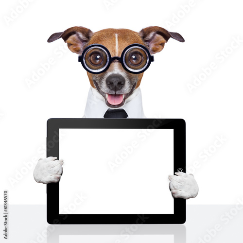 Fotobehang - dumb business dog
