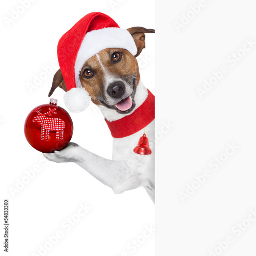 Fotobehang - hello goodbye christmas dog