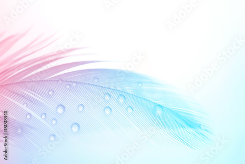 Fotobehang - Background gentle airy texture of light feather with water drops macro. Tinted blue pink and purple pastel colour. Elegant romantic artistic image.