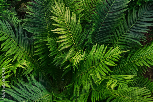 Fotobehang - Natural background of green fern leaves. Creative composition of the texture of leaves. Leaf texture background.