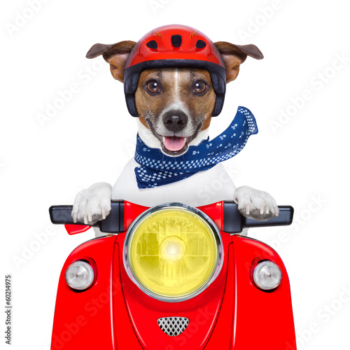 Fotobehang - motorcycle dog