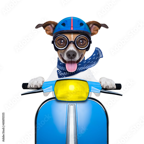 Fotobehang - crazy speed dog
