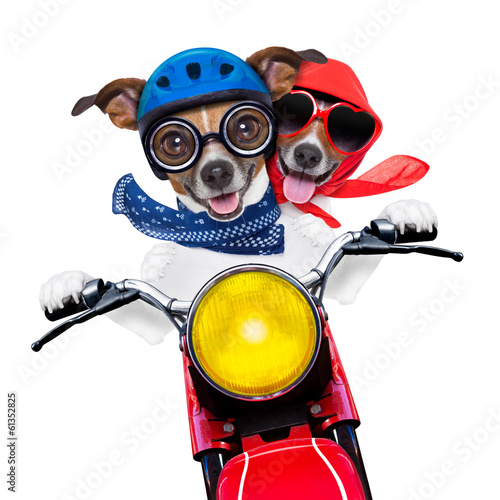 Fotobehang - motorbike couple of dogs