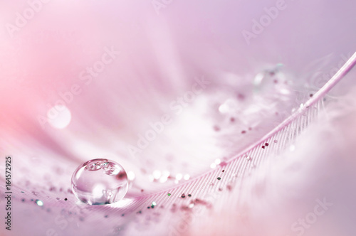 Fotobehang - Feather pink bird with sparkles and transparent drop of dew water sparkles in the rays of bright light close-up macro. Glamorous sophisticated airy ar