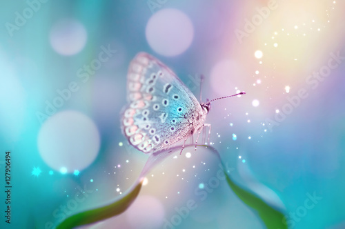 Fotobehang Beautiful white butterfly on white flower buds on a soft blurred blue background spring or summer in nature. Gentle romantic dreamy artistic image, be