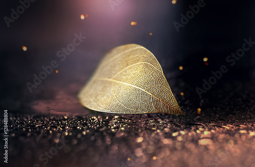 Fotobehang - Beautiful golden transparent skeleton leaves with texture on shiny abstract background blurred with round bokeh water drops close-up macro. Bright exp