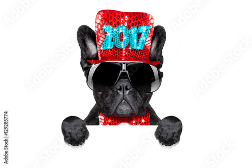 Fotobehang - happy new year dog celberation