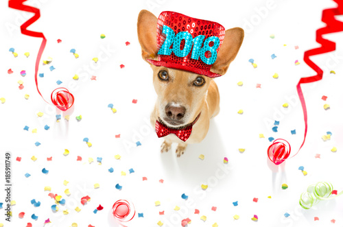 Fotobehang - happy new year dog