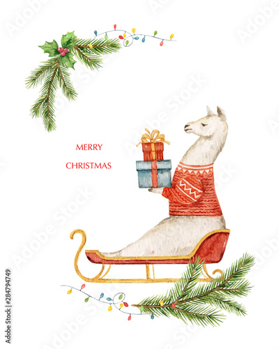 Fotobehang - Watercolor vector Christmas card Llama or alpaca and fir branches.