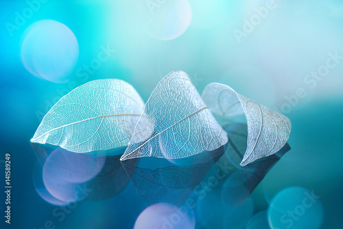 Fotobehang - White transparent leafs on mirror surface with reflection on blue background with round glare bokeh macro. Abstract artistic image template border nat