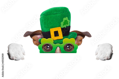Fotobehang - st patricks day dog