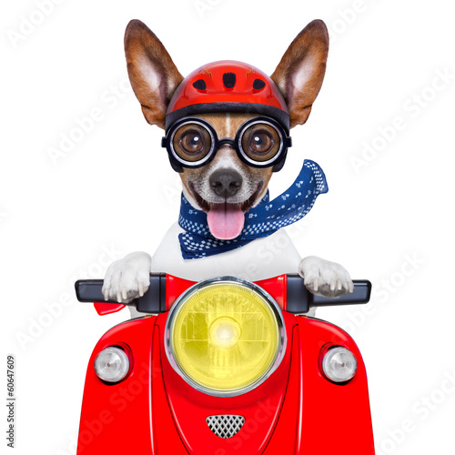 Fotobehang - crazy silly motorbike dog