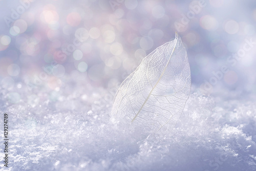 Fotobehang - White transparent skeleton leaf on snow outdoors in winter. Beautiful texture, sparkling round glistens bokeh blue pink. Gentle romantic artistic imag