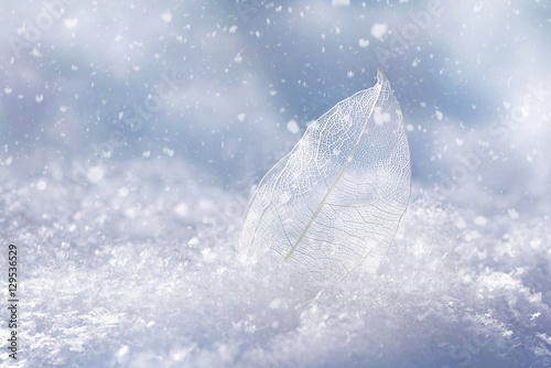 Fotobehang - White transparent skeleton leaf on snow outdoors in winter. Beautiful texture, falling snow flakes, soft blurred blue background. Gentle romantic arti