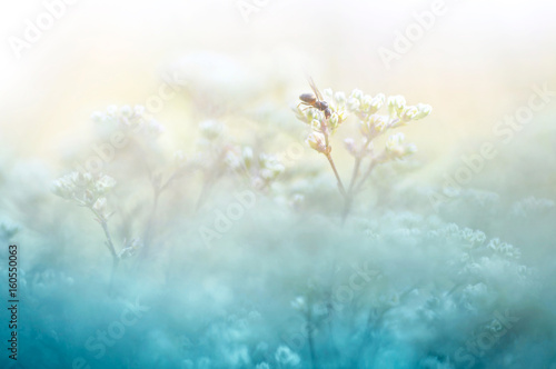 Fotobehang - A gentle natural background in pastel colors with a soft focus of blue and beige shades. A flowering plant in the spring with blurry soft outlines. An