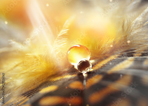 Fotobehang - Drops of water dew on a fluffy feather in the light sun close-up macro on golden brown blurred background. Abstract elegant airy delicious magical br