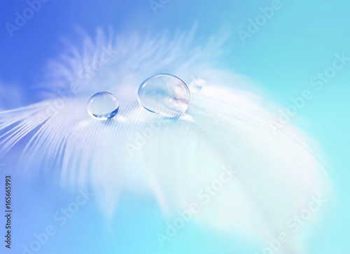Fotobehang - Background with bird feather. White light airy soft feather with transparent drops of water on turquoise background. Delicate dreamy exquisite artist