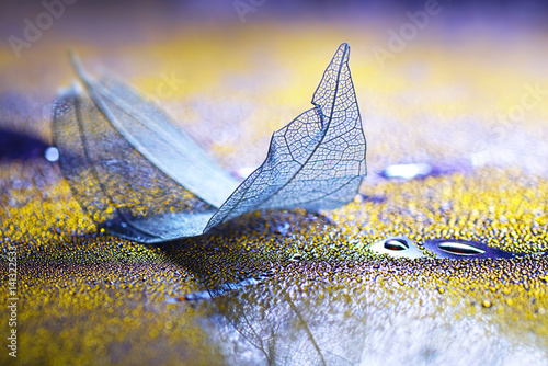 Fotobehang - Transparent blue sheet on a glass with drops of dew water on a yellow and purple background macro soft focus. Abstract elegant dreamy artistic image.