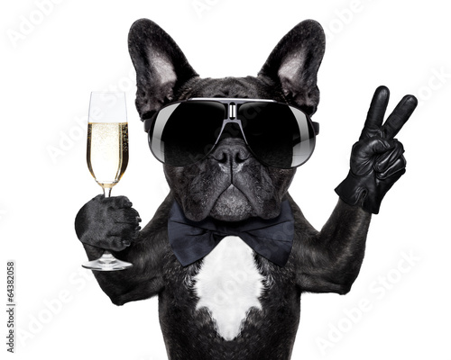 Fotobehang - cocktail dog