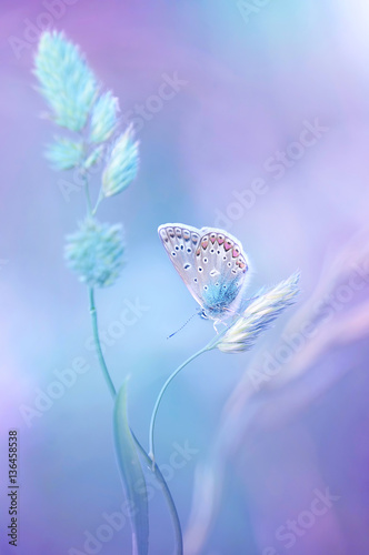 Fotobehang - Beautiful light-blue butterfly on blade of grass on a soft lilac blue background. Air soft romantic dreamy artistic image spring summer.