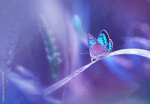 Fotobehang - Beautiful blue butterfly on blade of grass in nature with a soft focus on blurred purple background beautiful bokeh. Magic dreamy artistic image for w