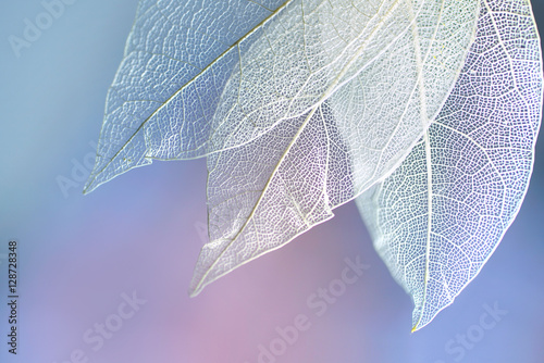 Fotobehang - White transparent skeleton leaves with beautiful texture on a blue, lilac and pink abstract background blurred close-up macro. Romantic gentle artisti